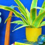 Hướng dẫn làm chậu cây lá xanh trang trí nhà