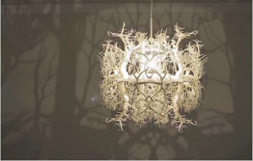 cách làm đèn chụm rễ cây